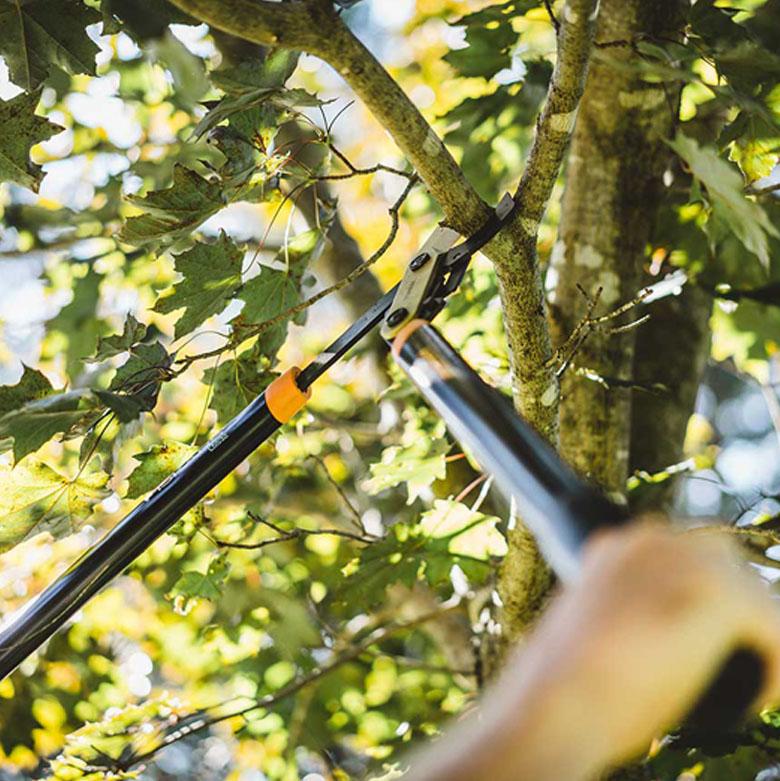 pruning pic 1
